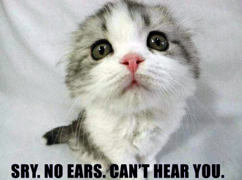 Meme Can't hear you - Kitten