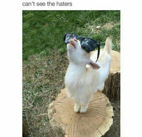 Meme Can't see the haters