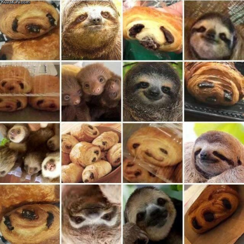 Pastry or sloth