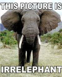 This picture is irrelephant