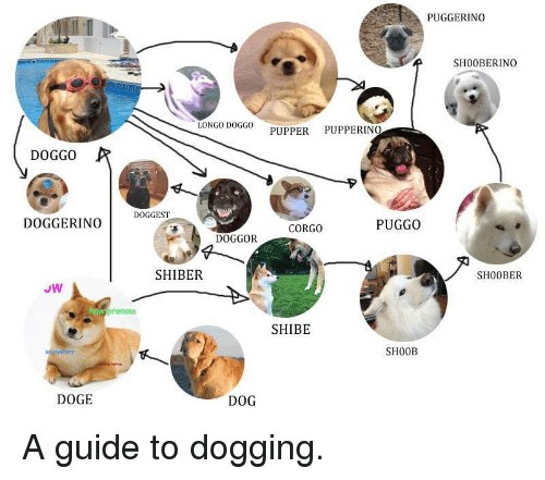 Meme A guide to dogging