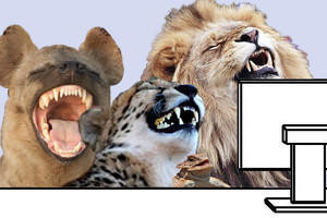 Meme Laughing Animals