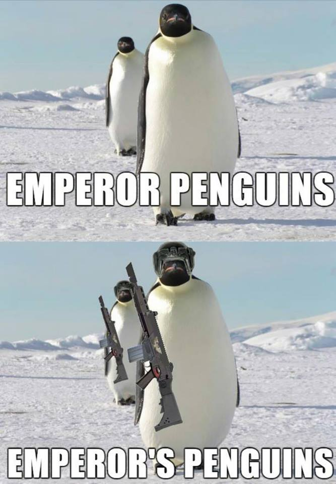 Meme Emperor penguins - Emperor's penguins