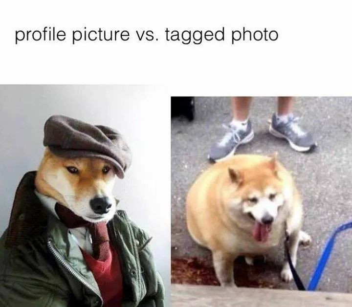 Meme Profile picture - Tagged photo